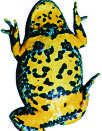 Yellow-bellied toad